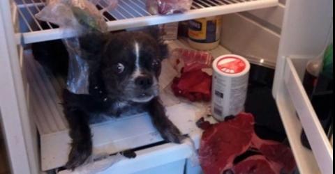Cuidado ao deixar seu animal sozinho, ele poder ter ideias nada divertidas